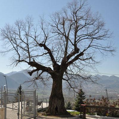 Bagnoli Irpino Castello Cavaniglia4